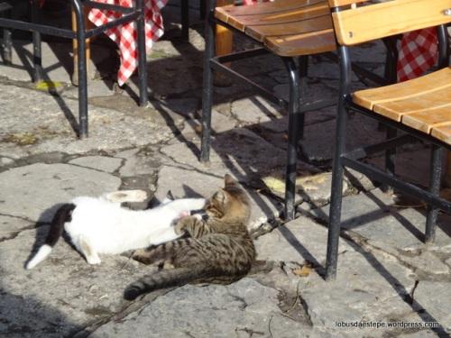 Istambul - Café Pierri Loti