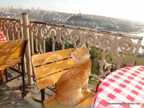 Istambul- Café Pierri Loti