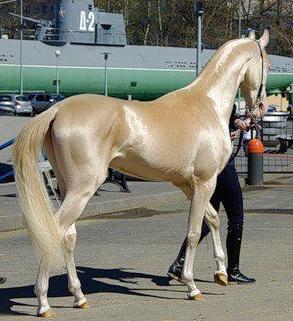 horse_beauty_30_8_2012