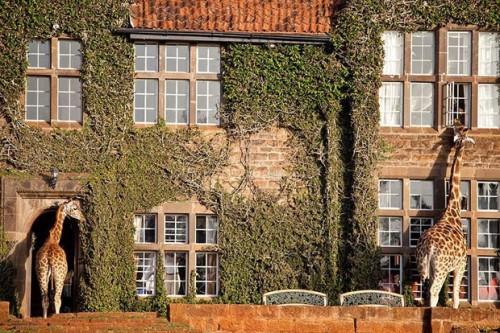 gcom_melhores_hoteis_31Giraffe Manor, Quênia