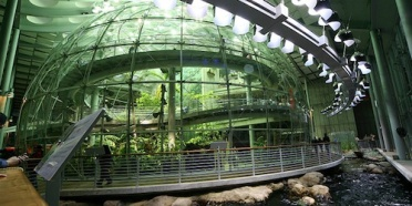 california-academy-of-sciences-indoor-rainforest