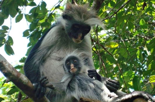 Tanzania017